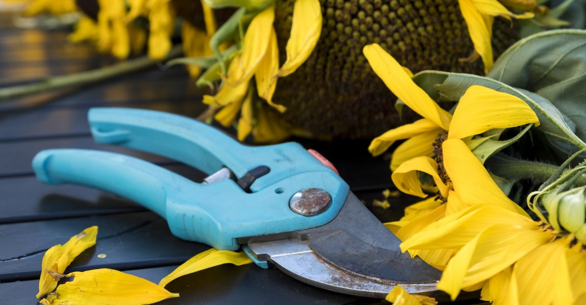 Pruning – Why, When, and How