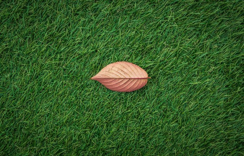Maintenance of synthetic grass