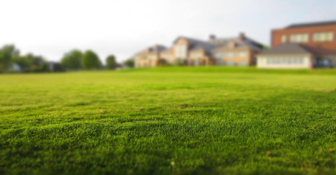Preparing to plant a lawn: what you need to know